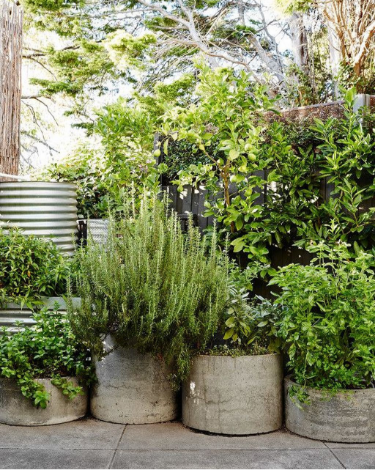Potted herb and flower garden inside of rustic concrete planters that adds a farmhouse vibe to any area.